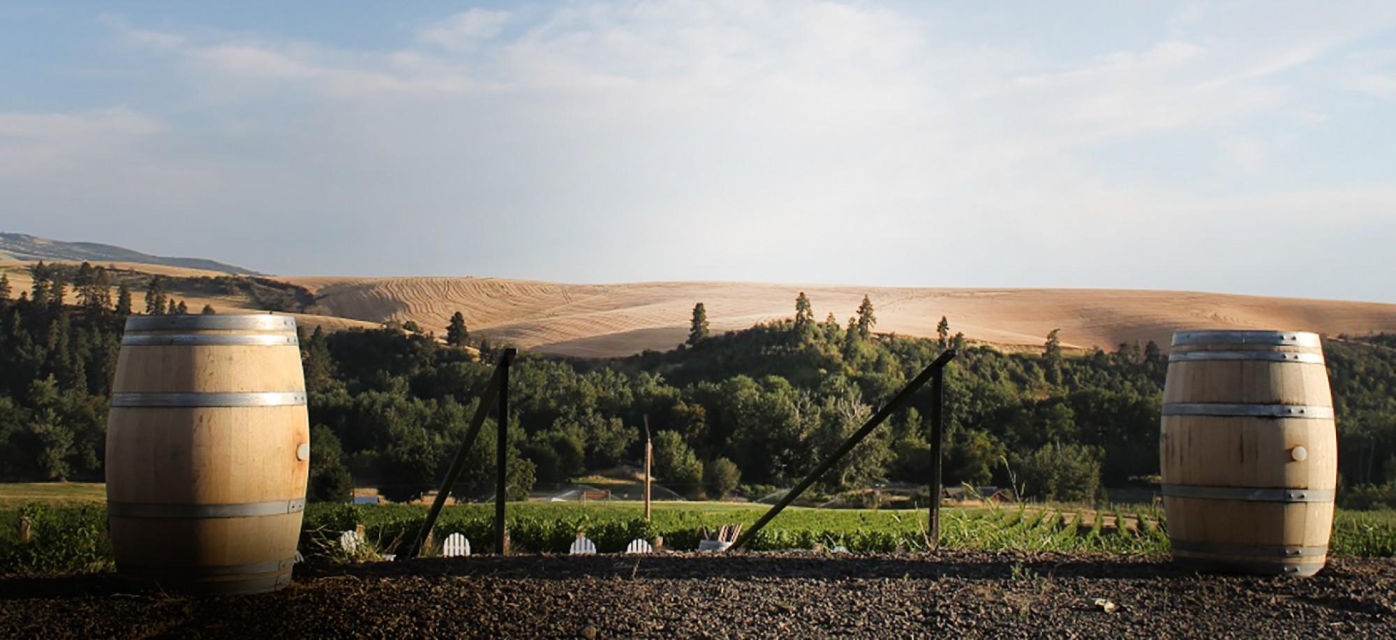 FIGGINS vineyard.