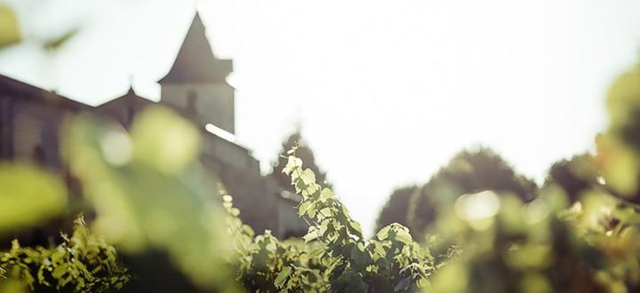 Vines & Church
