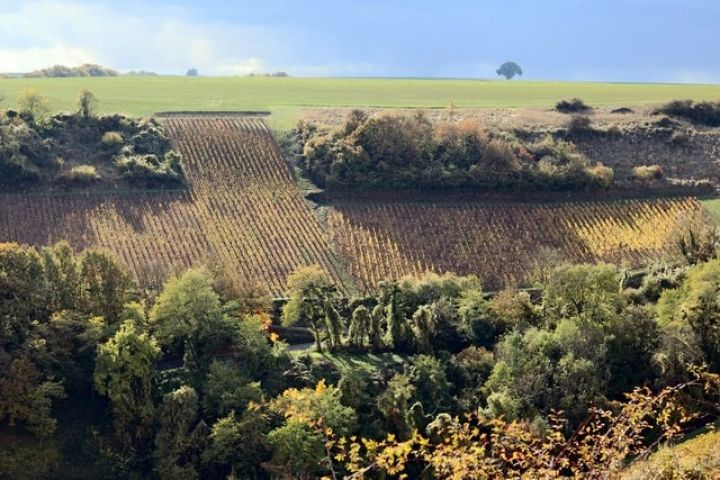 Domaine Yves Martin David Bowler Wine