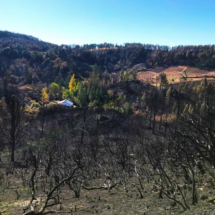 David Bowler Wine Wildfire Relief Promotion Lasts Entire Month of November