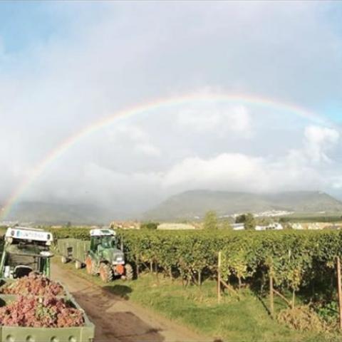 Der regenbogen @ Borell-Diehl