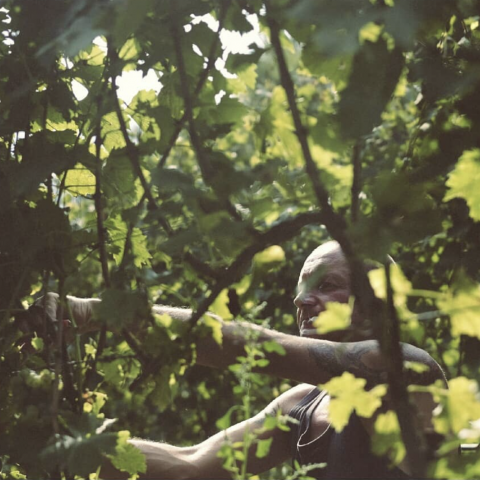 Harvest @ Foradori