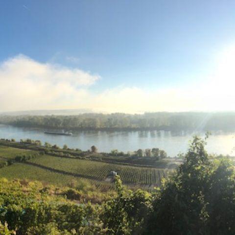 The vineyards of Gunderloch