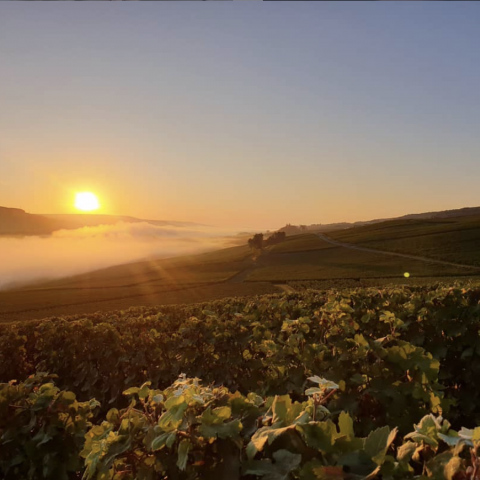 Sunrise at Champagne Tarlant