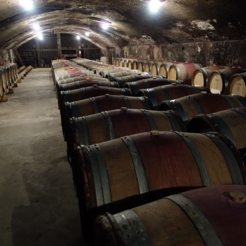 Barrels at Barbet in Beaujolais