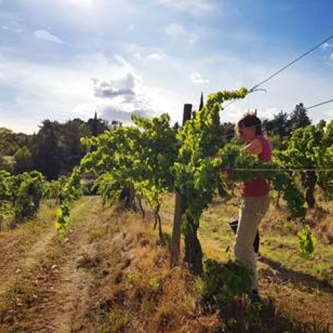 Picking @ Mourgues du Gres
