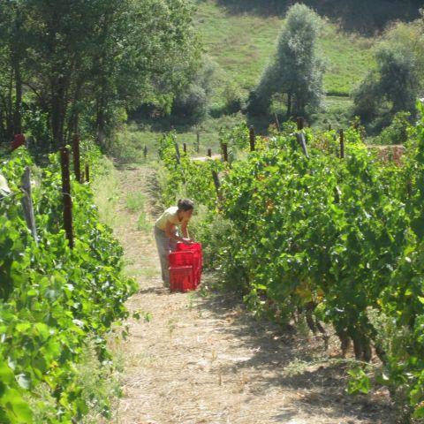 Picking @ Oltretorrente